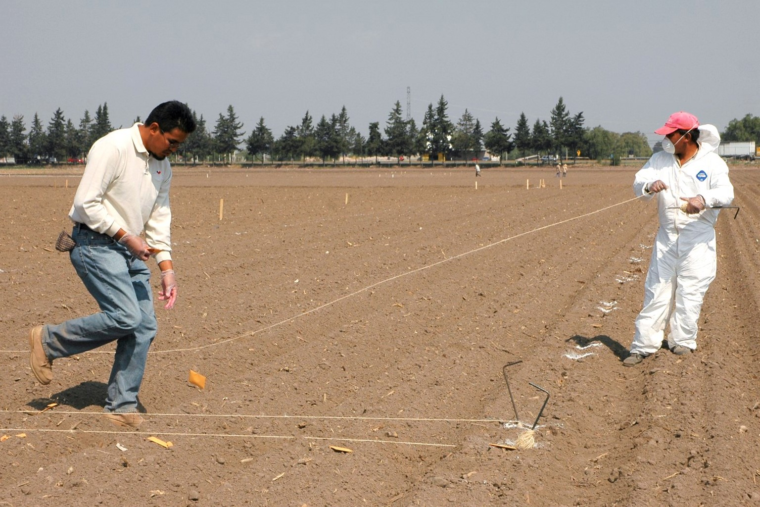 Laying out wheat trials for planting. Credit: CIMMYT