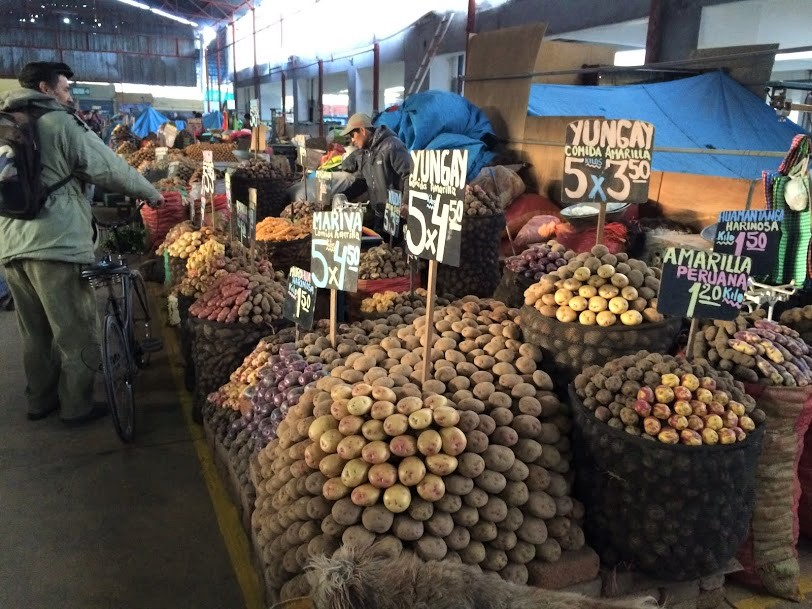Potato market CIP
